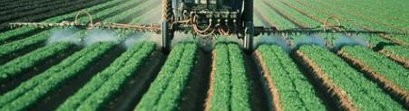 Združeni narodi: pesticidi kršijo človekove pravice